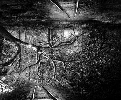 Surreal, Vice Versa, Upside Down, Landscape, Forest