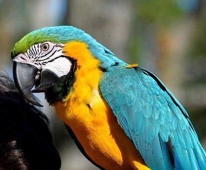 Macaw, Parrot, Bird, Animal, Pet, Vibrant, Color