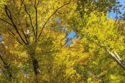 Canopy, Nature, Autumn, Beautiful, Idyllic, Color
