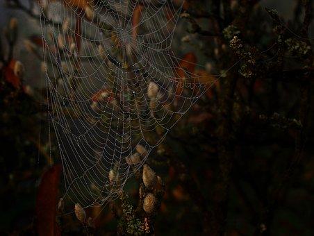 Cobweb, Web, Weave, Structure, Background, Close Up