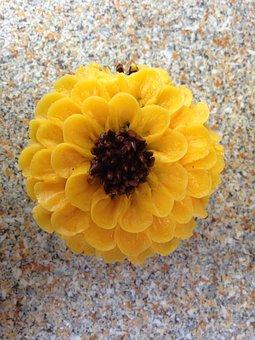 Cupcake, Sunflower, Decorated Bakery, Sweet Bakery