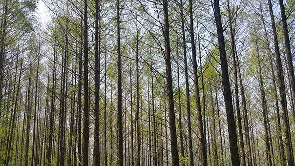 Forest, Meta-access Ecuador Find, Wood