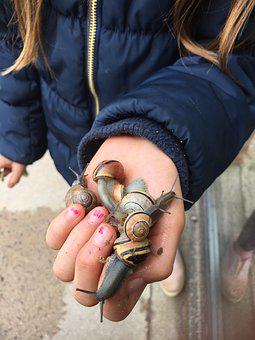 Slug, Snails, Children, Hand, Slimy, Seashell, Molluscs