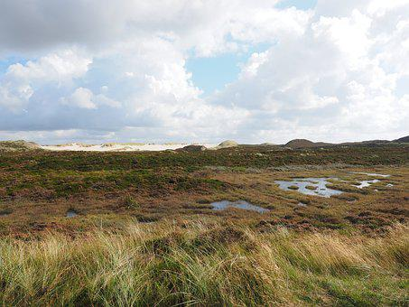 Heathland, Dunes, Peat Bog, Heather, Heath Area