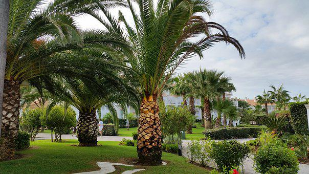 Palm Trees, Hotel Complex, Holiday, Hotel, Tourism