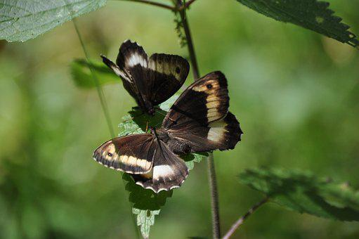 Butterflies, Insects, Nature, Butterfly, Insect, Colors