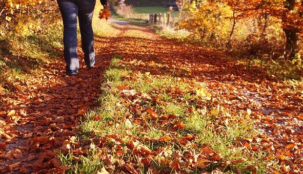 Autumn, Walk, Autumn Colours, Leaves, Away, Trail