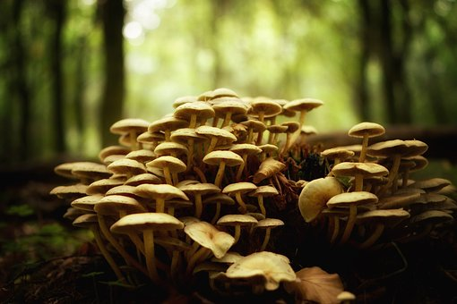 Mushrooms, Forest, Nature, Autumn, Mushroom Picking