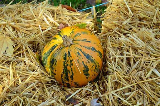 Pumpkin, Straw Bed, Orange, Green, Autumn, Decoration
