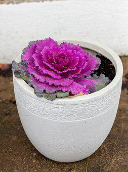 Flower, Pot, Purple, Close Up, Purple Flower, Garden