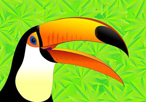 Toucan, Bird, Bird Of Paradise, Jungle, South Sea