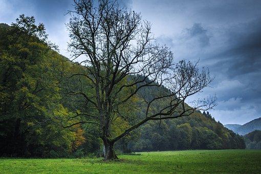 Autumn, Bare Tree, Wet, Gloomy, Cold, Uncomfortable
