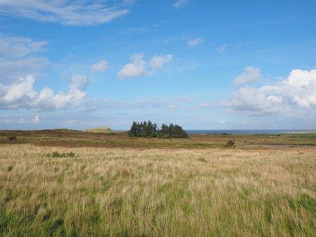 Heathland, Morsum Heath, Sylt, Marram Grass, Ammophila