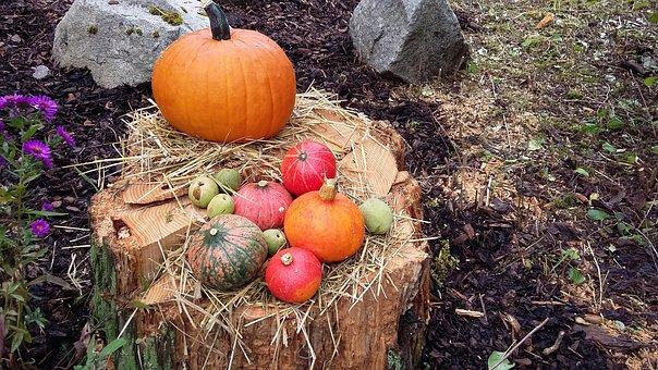 Autumn, Nature, Time Of Year, Autumn Decoration