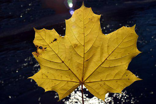 Leaf, Autumn, Fall Foliage, Golden Autumn, Nature