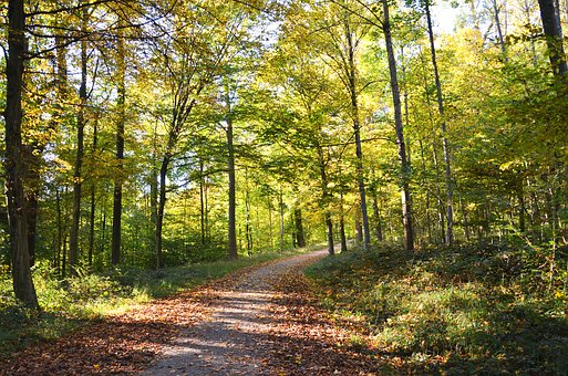 Autumn, Leaves, Fall Foliage, Away, Forest, Nature