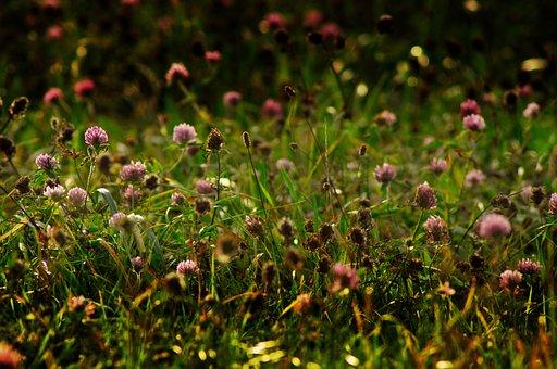 Flower Meadow, Autumn, Meadow, Bloom, Fade, Close