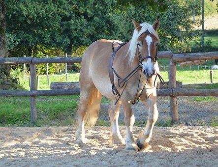 Horse, Equine, Standard, Brown, Hair Faded, Prairie