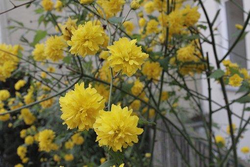 Flowers In The Yard, Vienna, Bush