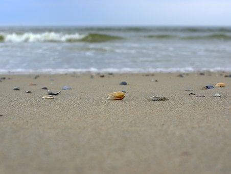 Mussels, Beach, Sand, Sea, Nature, Holiday, North Sea
