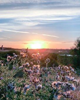 Sunset, Grass, Plants, Landscape, Horizon, Meadow