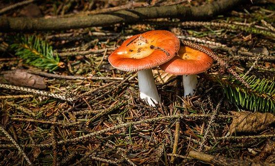 Mushrooms, Kottenforst, Buschhoven