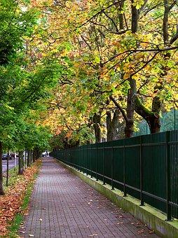 Alley, Park, Autumn, Street, Warsaw