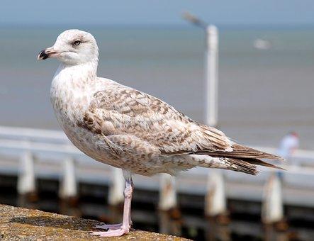 Seagulls, Port, North Sea, Belgium