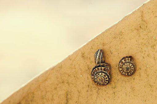 Snails, Shell, Nature, Land Snail, Housing Snail