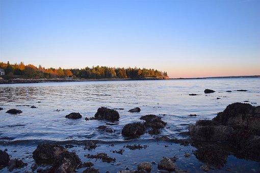 Shore, Sea, Beach, Ocean, Rocks, Trees, Pine, Maine