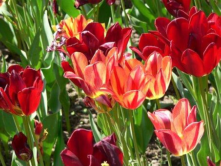 Villa Taranto, Flowers, Red, Red Flower, Bright Red