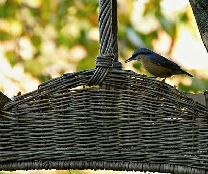 Little Bird, Spevavý, Hýľ, Plain, Cart, Feeding