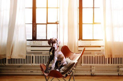 Dog, Chair, Boss, Chef, Executive Chair