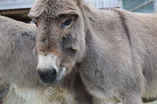 Animal, Farm, Donkey, Image, Picture, Free Image
