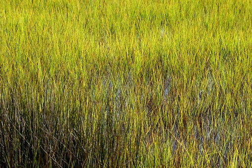 Marshland, Wetland, Florida, Swamp Grass, Water, Nature