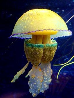 Color, Medusa, Underwater World