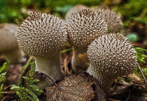 Mushroom, Mushroom Group, Bottles Russulas, Group