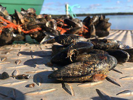 Mussels, Dock, River, Lake