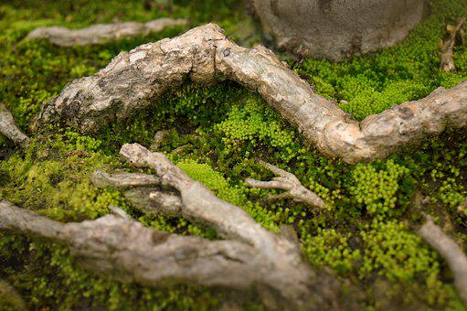 Natural, Moss Green, Tree Roots