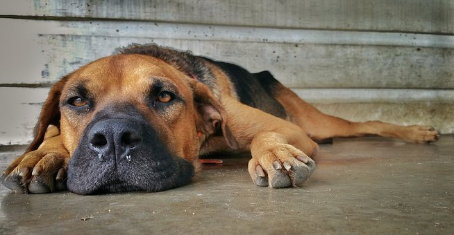 Dog, Nose, Paws, Braun, Eye's, Sad, Wall, Concrete