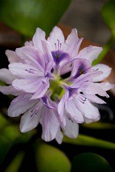 Orchid, Purple, Nature, Lotus Lake, Flowers, Refreshing