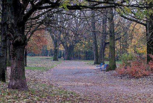Park, Fall, Tree, Allee