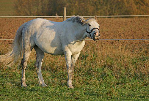 Horse, Pasture, Coupling, Paddock, Grin, White, Graze