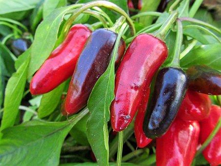Pepper, Red Pepper, Grow, Garden, Nursery, Green, Plant