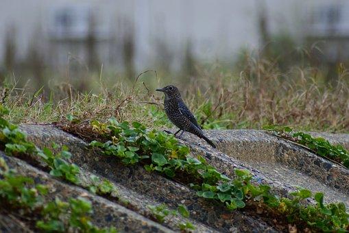 Animal, Sea, River, Waterside, Wild Birds, Little Bird