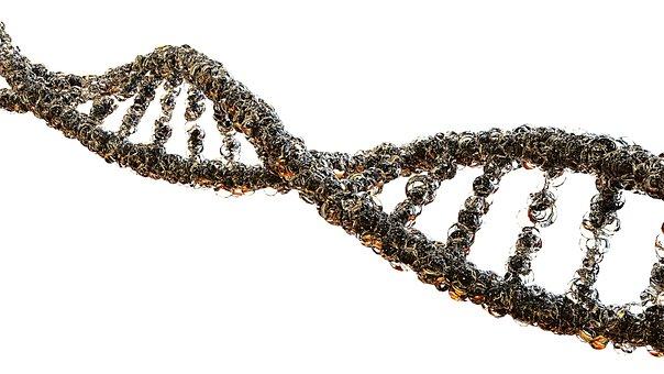 Gout, Biology, Strands Of Dna, Science, Genetics