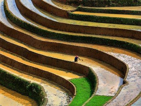 Scenery, Terraces, Season Pour Water Into The Fields