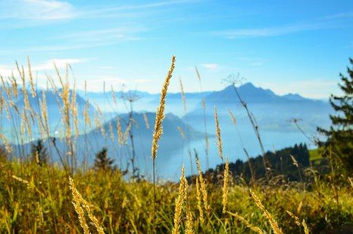 Blade Of Grass, Switzerland, Rigi, Pilatus, Vouch Stock