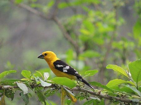 Traditional Bird Of Motupe, Chiclayo, Peru