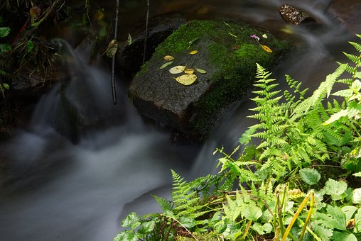 Water, Fern, Grass, Nature, Landscape, Forest, Stone